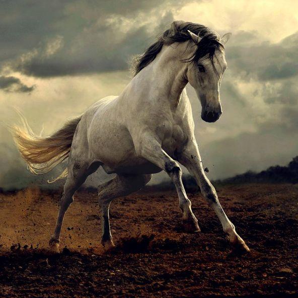 Wild-Horse.jpg